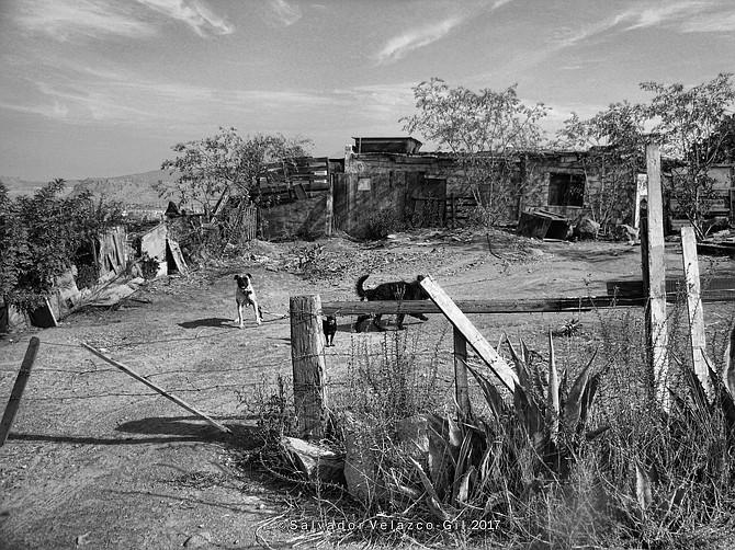 Neighborhood Photos Tijuana,Baja California,Mexico House and dogs in rural part of Tijuana