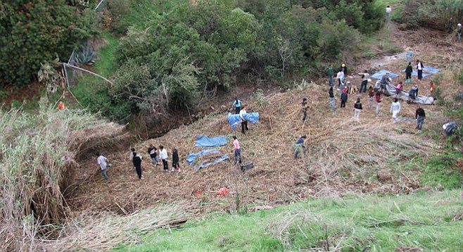 In a year's time, volunteers pulled about 10.9 metric tons of nonnative plants and 8.3 metric tons of trash.