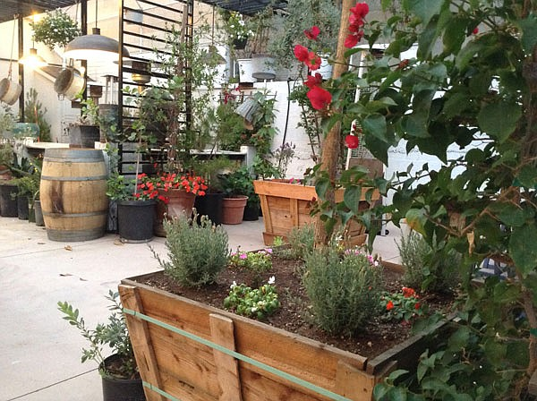 This magic space: olive, jacaranda, cypress, baby pines, bougainvillea, potted plants and herbs and flowers,