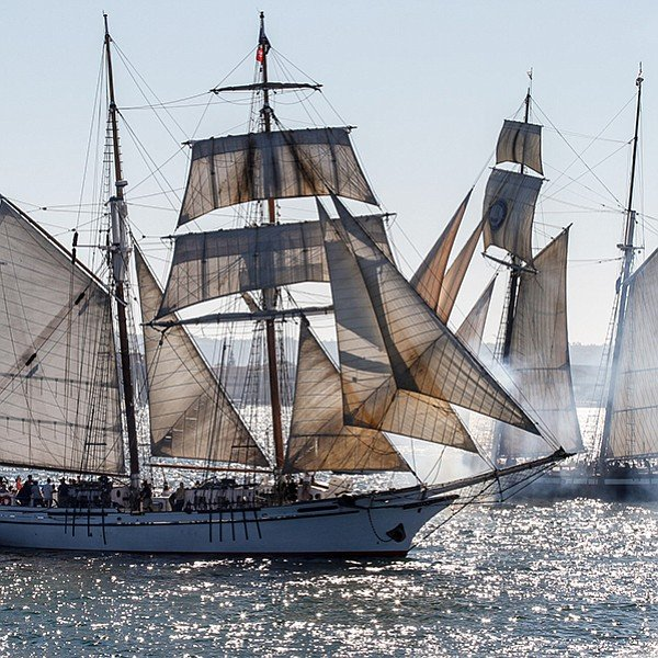 The Parade of Sail is visible from Shelter Island, Harbor Island, and the Embarcadero