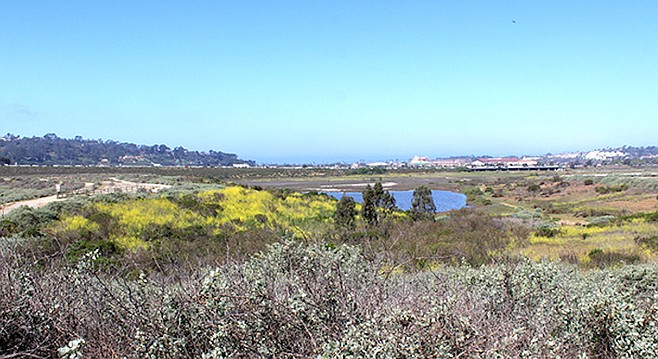 Looking toward Del Mar racetrack. Shades of gray and yellow have replaced the bright greens.