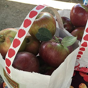 Apple displays, music and dancing, an antique tractor display, gold-panning demonstrations