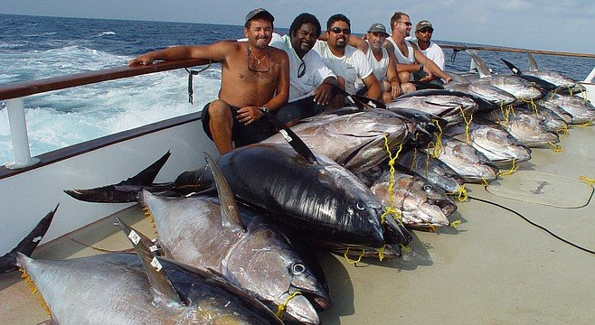 The yellowfin numbers went up nearly tenfold.
