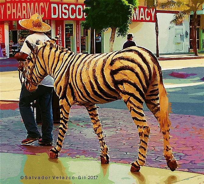 Neighborhood Photos Tijuana,Baja California,Mexico