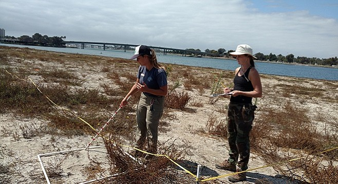 Flaherty (left) and a volunteer collect ground-cover data at Stony Point on Fiesta Island