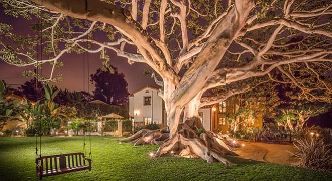 The Moreton Bay fig tree is allegedly the second- or third-oldest tree in the county.