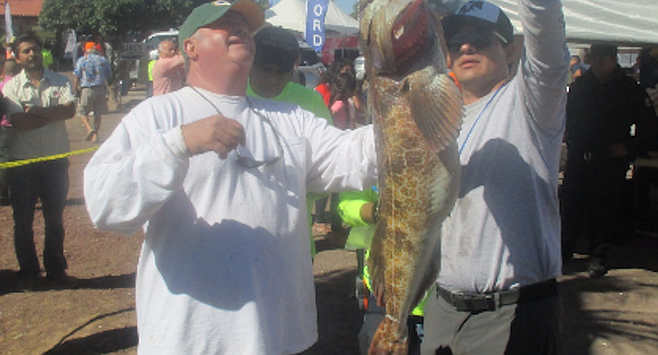 Fish weighing at San Quintin. Average size lingcod have been edging back toward the big aggressive lingcod of San Quintin's past.