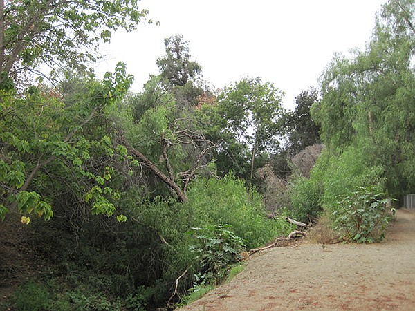 In the winter of 2017, a number of trees uprooted and toppled over into the creek.