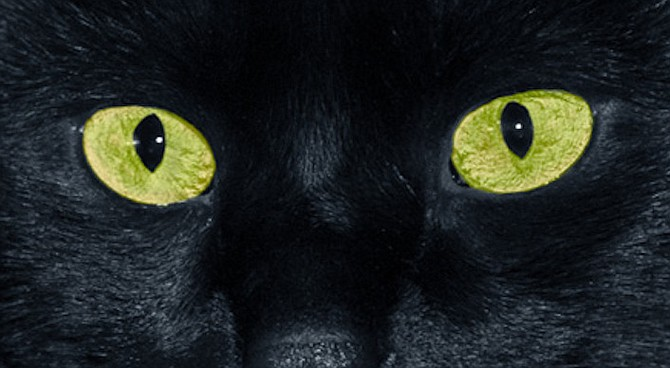 Animals can see in the dark.
