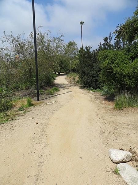 Native plant landscape path