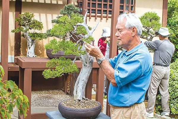 Glen Jensen of the Bonsai Club refused to name this California juniper in the Japanese Friendship Garden.