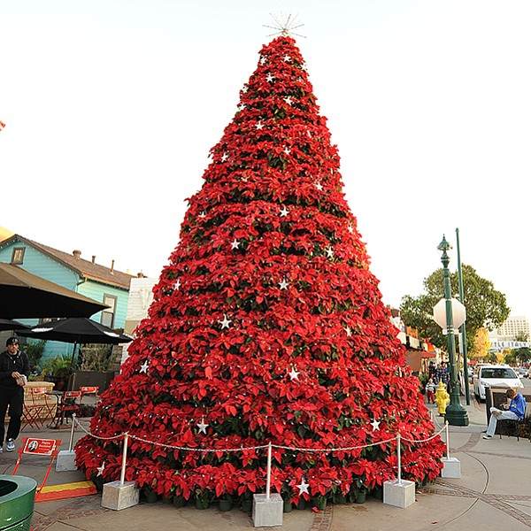Celebrate the Christmas season in Little Italy