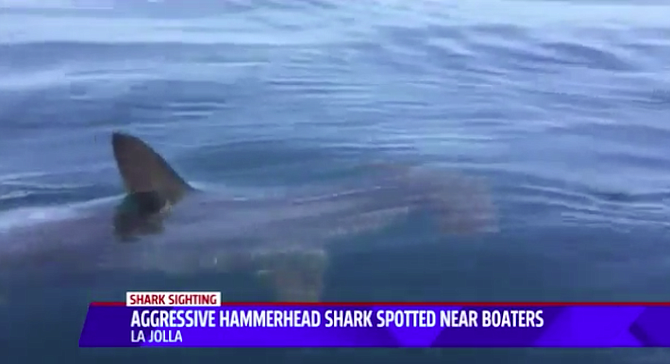 From Fox5 story on sharks and La Jolla kayakers