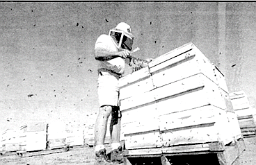 In San Diego County a hive has to be located 100 feet from a road, 600 feet from a dwelling.