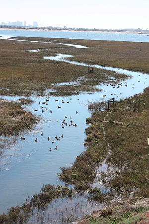 Tidal channels at Kendall-Frost marsh