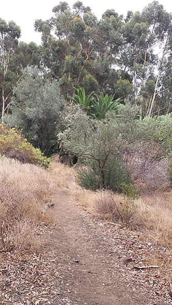 One of the smaller trails