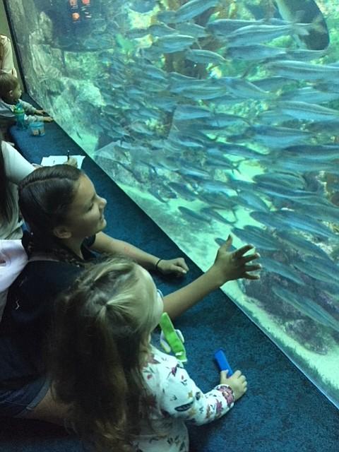 Beauty at Birch Aquarium