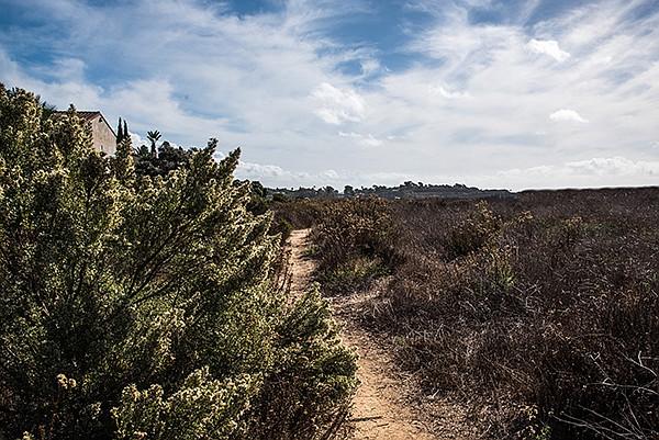 Coastal sage near trail