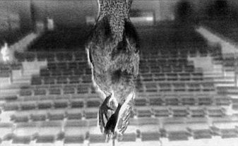 A hanged chicken swings like a censer over the supposed corpse's chest.