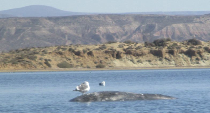 By day three, Sunday, the yearling whale had a name: Moby Dick.