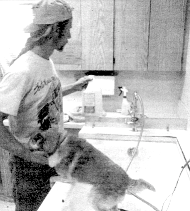 Volunteer washing dog