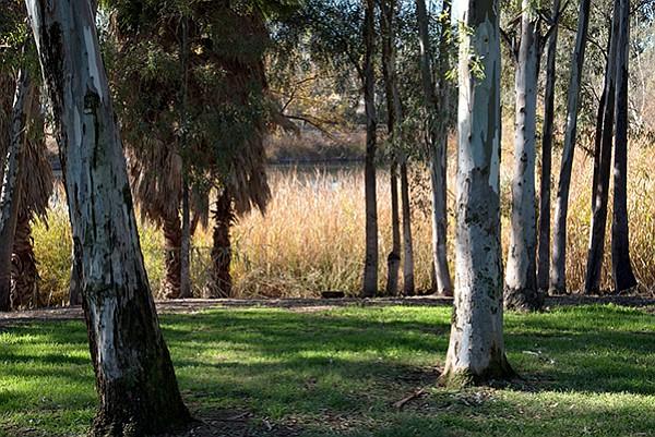 The trees at Tree Lake