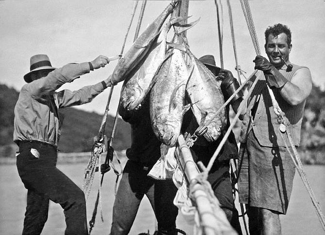 Albacore, albacore, you know you are a fish galore.