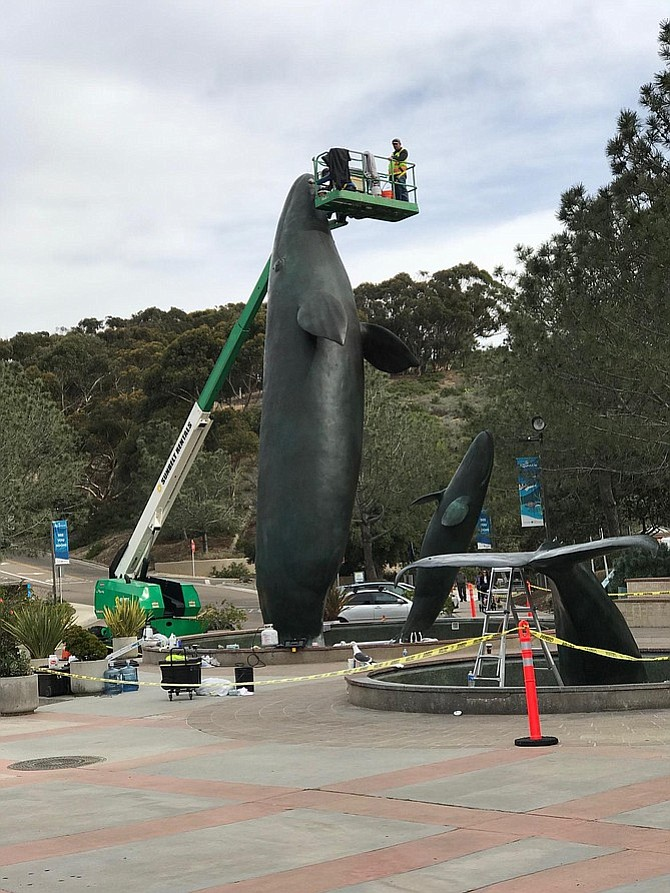 Sculpture Conservation Studio of Los Angeles recently completed maintenance of the Legacy whale statue at Birch Aquarium.