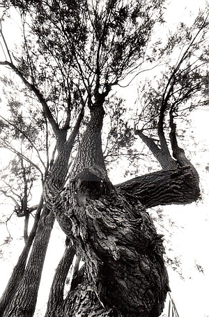 Add this to a number of dead-standing trees, others that looked as if they'd be better off dead.