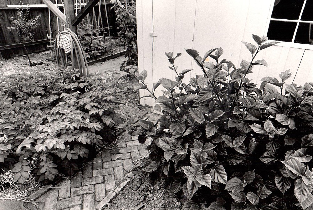 Author's garden. For those of a certain bent, a garden defines home in a way that nothing else can.
