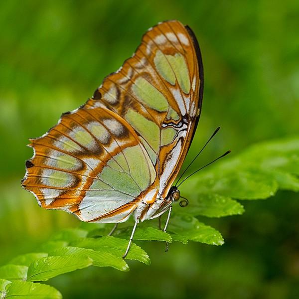 10,000 exotic butterflies