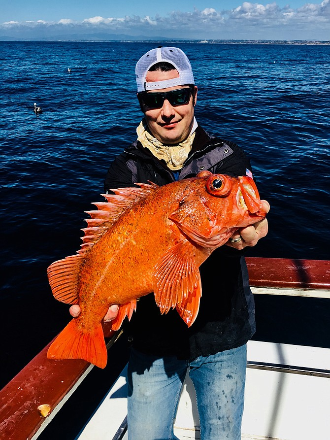JP on one of the recent local half days out of Helgren's in the Oceanside Harbor. 5lbs Vermilion , Red Rockfish