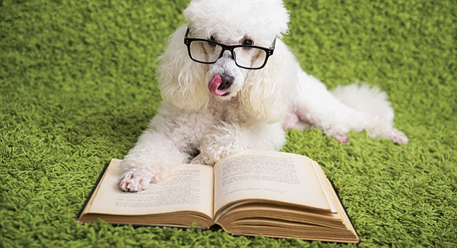"""""""A small , white, poodle looking"""" dog lunged and barked at librarian Bob Surratt. Pooch's owner: that's was what the dog was trained to do"""