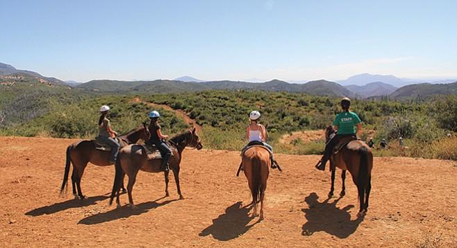 YMCA Raintree: 40 horses on site