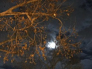 Full moon peaking through our tree.