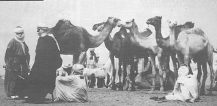 Camel market, Agadez, Niger