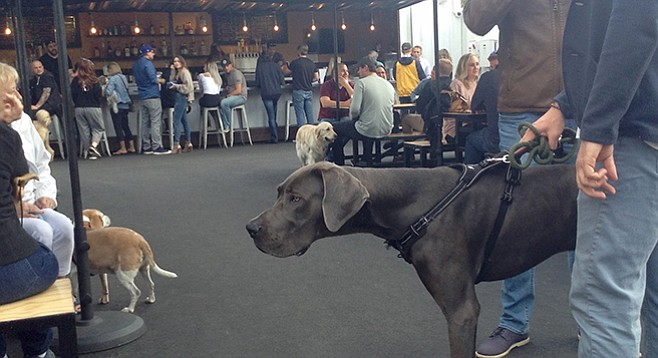 People from all walks of life walk their dogs and their selves to Quartyard's new digs