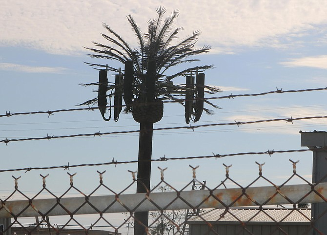 Palm tree hiding cell tower
