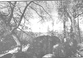 Carraso's hunting stand was an outcropping of stone in Dyche Valley, on a slope of Palomar Mountain.