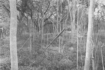 First Award, black and white, Robert Barry, Diagonal, Felicita Park, Escondido CA