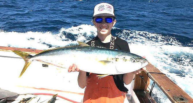 Yellowtail caught while searching for bluefin