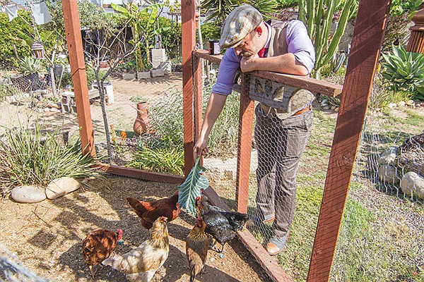 Gielow spends his afternoons and weekends tending his chickens.