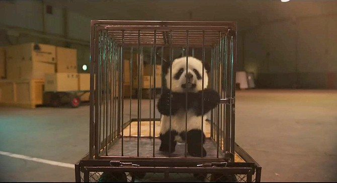 It was the otherwise unclean Show Dogs, with it's subplot about panda smugglers, that led me to Project X. The rest was elementary.