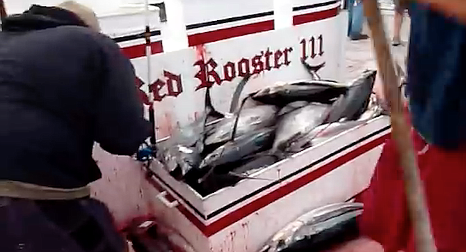 From YouTube video of 2010 Red Rooster III albacore trip