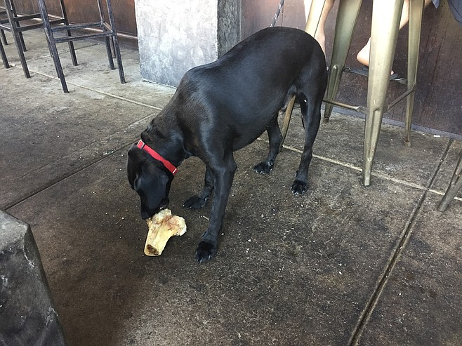 Happy dog with a bone from the kitchen