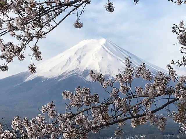 Mount Fuji and cherry blossoms.