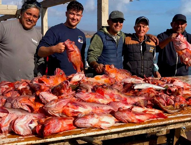 This massive catch of cow cod and red rock cod taken in late May of 2018 tells the whole story.