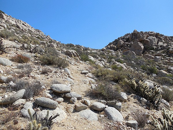 The use trail heads up to the summit ridge