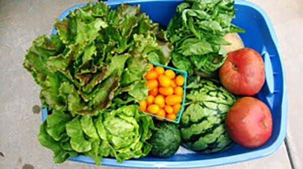 Organic CSA produce box