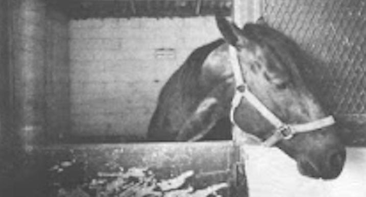 Quarantined horse